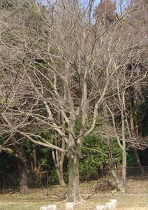 エノキ遠景s.jpg