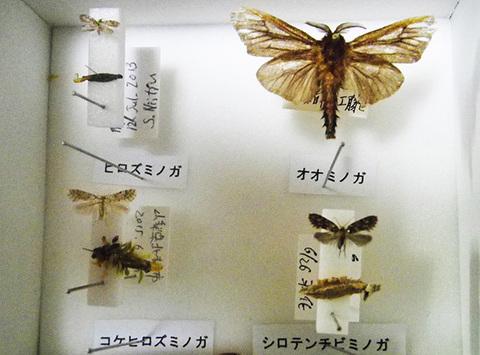 ミノガ4種s.jpg