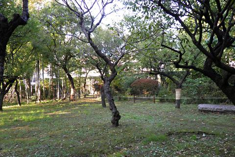 ワラ巻きのある緑地.jpg
