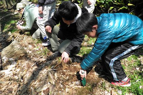 朽ち木の中の虫さがしs4080015.jpg
