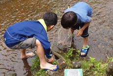 水生昆虫を採る2人s.jpg