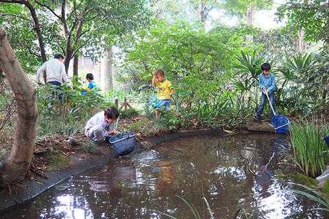 池の生きもの調べ0011cs.jpg