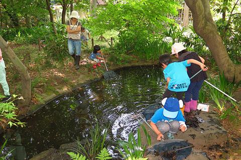 池の生きもの調べ0033s.jpg