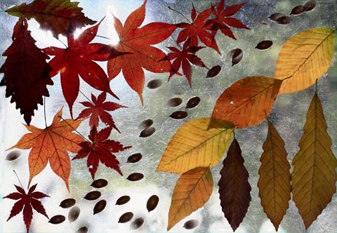秋の森ステンドグラス6226s.jpg