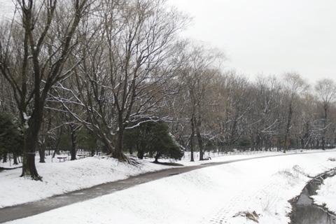 雪の野川公園s.jpg