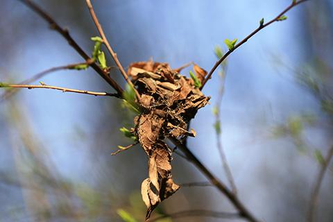 コロギスの巣4253s.jpg