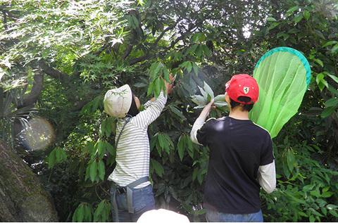 シロダモの葉にs.jpg