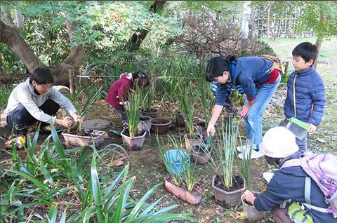 セキショウを鉢に植える0014s.jpg