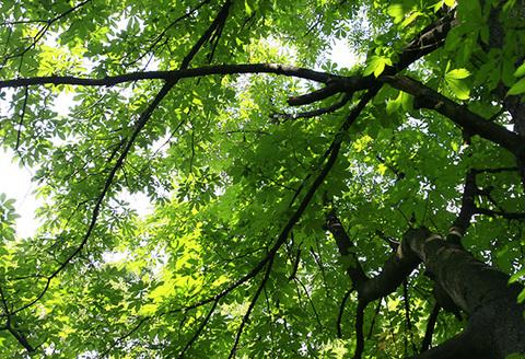 天気雨の木々7140s.jpg