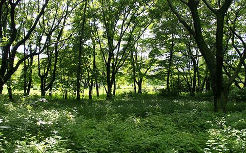 天気雨の林7137cs.jpg
