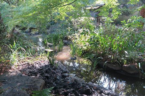 水草を入れた池0017s.jpg