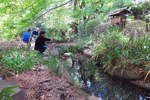池の生きもの調べ0013s.jpg