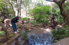 池の生きもの調べcs.jpg