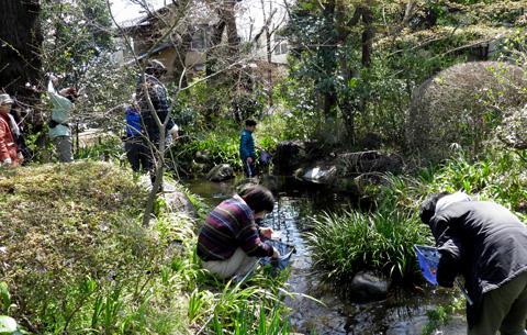 池の生きもの調べ4080029.jpg