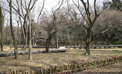 自然観察園3999.jpg