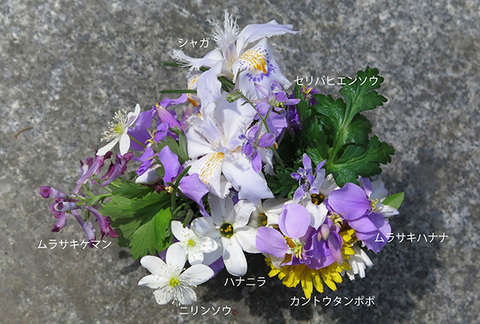 花束・種名付0048cs.jpg
